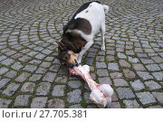 Купить «animal skin dog engulf devour», фото № 27705381, снято 17 июля 2019 г. (c) PantherMedia / Фотобанк Лори