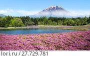 Купить «Fuji with the field of pink moss at Shibazakura festival, Yamanashi, Japan», фото № 27729781, снято 16 июля 2019 г. (c) PantherMedia / Фотобанк Лори