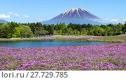 Купить «Fuji with the field of pink moss at Shibazakura festival, Yamanashi, Japan», фото № 27729785, снято 17 июля 2019 г. (c) PantherMedia / Фотобанк Лори