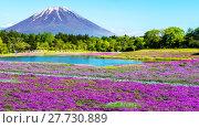 Купить «Fuji with the field of pink moss at Shibazakura festival, Yamanashi, Japan», фото № 27730889, снято 23 июля 2019 г. (c) PantherMedia / Фотобанк Лори