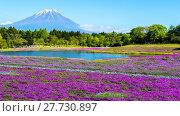 Купить «Fuji with the field of pink moss at Shibazakura festival, Yamanashi, Japan», фото № 27730897, снято 17 июля 2019 г. (c) PantherMedia / Фотобанк Лори