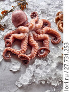 Купить «Raw Octopus with Kelp and Melting Ice», фото № 27731253, снято 19 февраля 2018 г. (c) PantherMedia / Фотобанк Лори
