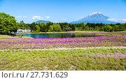 Купить «Fuji with the field of pink moss at Shibazakura festival, Yamanashi, Japan», фото № 27731629, снято 17 июля 2019 г. (c) PantherMedia / Фотобанк Лори