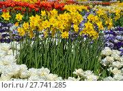 Купить «plant flower park spring flowers», фото № 27741285, снято 18 октября 2018 г. (c) PantherMedia / Фотобанк Лори
