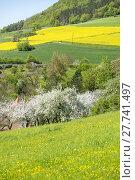 Купить «nature landscape tree season spring», фото № 27741497, снято 22 февраля 2019 г. (c) PantherMedia / Фотобанк Лори