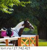 Купить «Спортивная лошадь под седлом в манеже на фоне парка», фото № 27742421, снято 9 июня 2013 г. (c) Абрамова Ксения / Фотобанк Лори