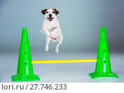 Купить «Small Jack Russell Terrier jumping high», фото № 27746233, снято 9 апреля 2020 г. (c) PantherMedia / Фотобанк Лори