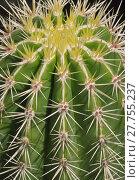 Купить «closeup perspective symmetry cactus prospect», фото № 27755237, снято 22 апреля 2019 г. (c) PantherMedia / Фотобанк Лори
