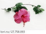 Купить «Tropical flower», фото № 27758093, снято 20 сентября 2019 г. (c) easy Fotostock / Фотобанк Лори