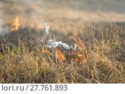 Купить «burns dry grass fire», фото № 27761893, снято 27 марта 2019 г. (c) PantherMedia / Фотобанк Лори