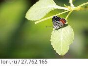 Купить «Cute Little Butterfly», фото № 27762165, снято 25 июня 2019 г. (c) PantherMedia / Фотобанк Лори