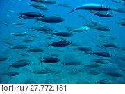 Купить «nature water animal sea ocean», фото № 27772181, снято 27 мая 2019 г. (c) PantherMedia / Фотобанк Лори