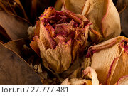 Купить «Decoration of dried flowers. Roses», фото № 27777481, снято 26 апреля 2018 г. (c) PantherMedia / Фотобанк Лори