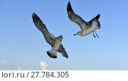 Купить «black sea,sveti konstantin.nikon d800e.13.09.2014 ..», фото № 27784305, снято 20 марта 2019 г. (c) PantherMedia / Фотобанк Лори