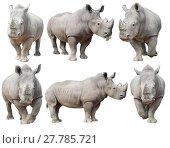 Купить «white rhinoceros, square-lipped rhinoceros isolated», фото № 27785721, снято 27 мая 2019 г. (c) PantherMedia / Фотобанк Лори
