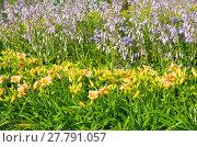 Купить «Летняя клумба с лилейником и цветущей хостой», фото № 27791057, снято 1 августа 2017 г. (c) Елена Коромыслова / Фотобанк Лори