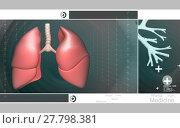 Купить «Human lungs », фото № 27798381, снято 24 марта 2019 г. (c) PantherMedia / Фотобанк Лори