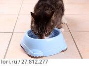 Купить «cat engulf devour pussycat fodder», фото № 27812277, снято 17 июля 2019 г. (c) PantherMedia / Фотобанк Лори