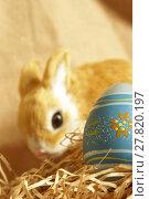 Купить «Easter Bunny and Egg», фото № 27820197, снято 27 марта 2019 г. (c) PantherMedia / Фотобанк Лори