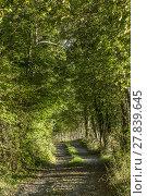 Купить «typical narrow road through the dense forest», фото № 27839645, снято 22 июля 2019 г. (c) PantherMedia / Фотобанк Лори