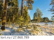Купить «Зимний пейзаж с заснеженными деревьями на краю поля», фото № 27860789, снято 8 января 2018 г. (c) Сергей Васильев / Фотобанк Лори