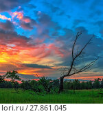 Купить «Dead wood on a background of dramatic sunset», фото № 27861045, снято 17 июля 2018 г. (c) PantherMedia / Фотобанк Лори