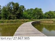 Купить «Long wood bridge in mangrove forest», фото № 27867905, снято 22 июля 2019 г. (c) PantherMedia / Фотобанк Лори