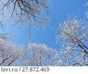 Купить «Заснеженные кроны деревьев, вид снизу вверх», эксклюзивное фото № 27872469, снято 6 февраля 2018 г. (c) lana1501 / Фотобанк Лори