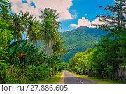 Купить «Road Through Jungle», фото № 27886605, снято 23 февраля 2019 г. (c) easy Fotostock / Фотобанк Лори
