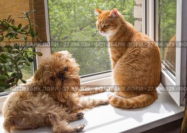 Купить «Dog and the cat on the window», фото № 27896929, снято 30 июля 2017 г. (c) Okssi / Фотобанк Лори