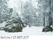 Купить «Blurred winter mountain forest with mossy icy boulders in the foreground», фото № 27897217, снято 8 января 2018 г. (c) Евгений Харитонов / Фотобанк Лори