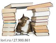 Купить «Cat sitting in the house of books», фото № 27900861, снято 28 ноября 2017 г. (c) Okssi / Фотобанк Лори