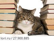Купить «Big gray cat sitting in the house of books», фото № 27900885, снято 28 ноября 2017 г. (c) Okssi / Фотобанк Лори