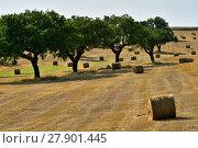 Купить «Rural lanscape, Alentejo, Portugal», фото № 27901445, снято 12 июня 2017 г. (c) Знаменский Олег / Фотобанк Лори