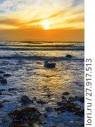 Купить «kelp at rocky beal beach», фото № 27917513, снято 19 февраля 2018 г. (c) PantherMedia / Фотобанк Лори