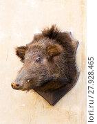 Купить «Stuffed wild boar head on a wall», фото № 27928465, снято 18 февраля 2019 г. (c) PantherMedia / Фотобанк Лори
