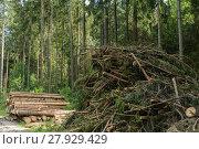 Купить «branches and roundwood - forestry», фото № 27929429, снято 20 марта 2019 г. (c) PantherMedia / Фотобанк Лори