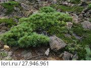 Купить «Kunasir Kurils islands Rocks Russia», фото № 27946961, снято 22 марта 2019 г. (c) PantherMedia / Фотобанк Лори