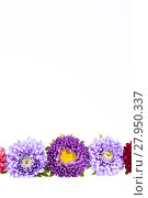 Купить «Colorful aster flowers isolated on white background», фото № 27950337, снято 15 августа 2018 г. (c) PantherMedia / Фотобанк Лори