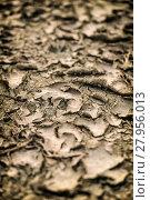 Купить «Crack ground drought», фото № 27956013, снято 17 июня 2019 г. (c) PantherMedia / Фотобанк Лори