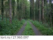 Купить «forest day», фото № 27960097, снято 20 августа 2019 г. (c) PantherMedia / Фотобанк Лори