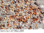 Купить «lots of sea snail shells», фото № 27962289, снято 23 апреля 2019 г. (c) PantherMedia / Фотобанк Лори