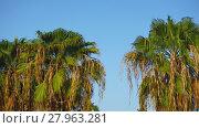 Купить «palm tree», фото № 27963281, снято 24 марта 2018 г. (c) PantherMedia / Фотобанк Лори