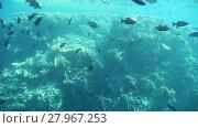 Купить «Underwater footage of sea life. Sharm El Sheikh, Egypt», видеоролик № 27967253, снято 9 января 2015 г. (c) Алексей Кузнецов / Фотобанк Лори