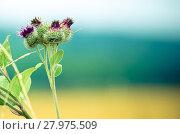Купить «Untouched and colorful nature», фото № 27975509, снято 23 мая 2019 г. (c) PantherMedia / Фотобанк Лори