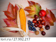 Купить «grapes, leaves, apple, corncob,chestnut,and walnut  on wooden ground», фото № 27992217, снято 17 февраля 2019 г. (c) PantherMedia / Фотобанк Лори