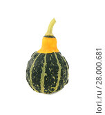 Купить «Green ornamental squash with yellow neck, green stripes and bumpy skin», фото № 28000681, снято 23 сентября 2018 г. (c) PantherMedia / Фотобанк Лори