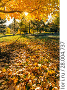 Купить «Autumn tree leafs on grass background », фото № 28004737, снято 19 декабря 2018 г. (c) PantherMedia / Фотобанк Лори
