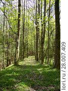 Купить «forest in a forest in styria», фото № 28007409, снято 17 июня 2019 г. (c) PantherMedia / Фотобанк Лори