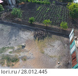 Купить «Flock of domestic geese walking in the yard. View from above.», фото № 28012445, снято 19 февраля 2018 г. (c) PantherMedia / Фотобанк Лори